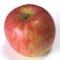リンゴ酵母